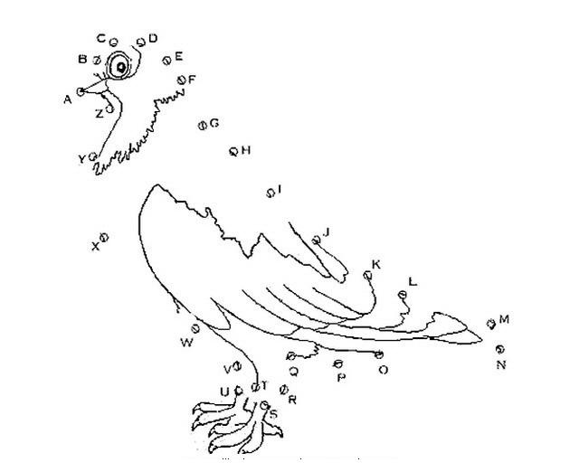 Dibujos de animales con puntos - Imagui