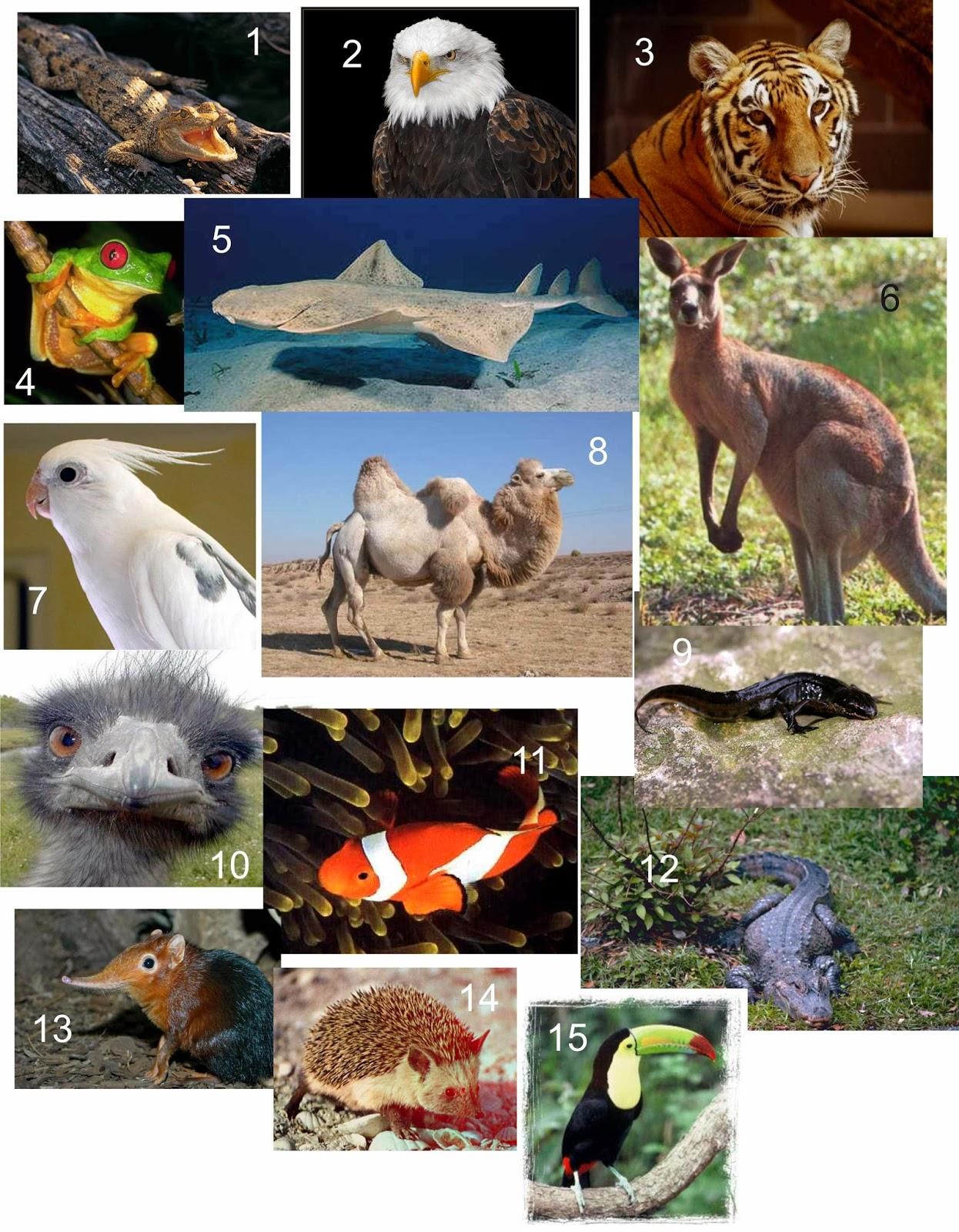 els animals  els animals vertebrats