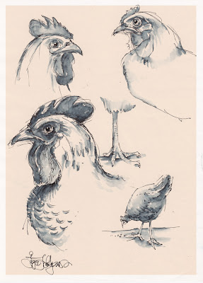 chicken drawing, sketch