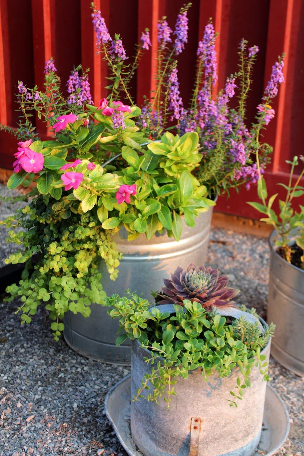 Galvanized flower buckets for Large galvanized buckets for flowers