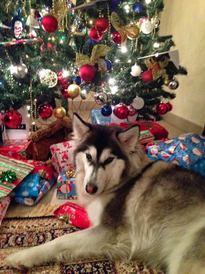 Christmas Day '14