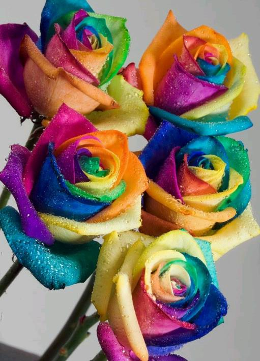 beautiful and colorful flowers beautyway2life