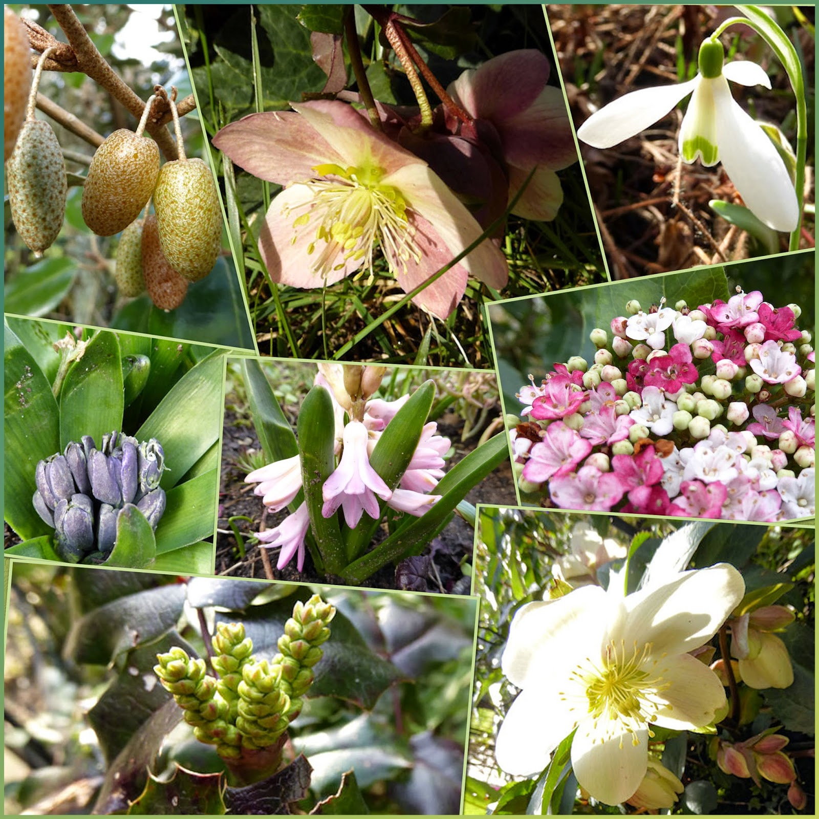 Coquelicots coquillages et belles pages quoi de for Au jardin des fleurs