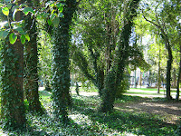 Landscape japanese garden Montevideo Uruguay