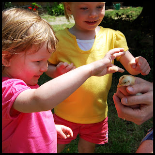 Mini Cheddar her Friend Ryleigh Stroking A Baby Chick