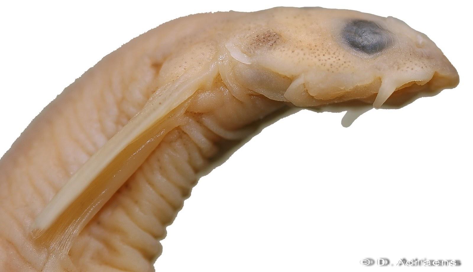 vagina adentro: