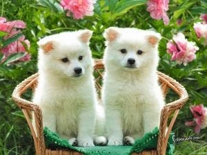 Cute Dogs Gallery