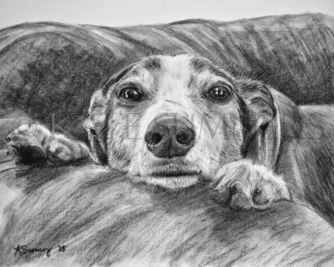 pet portrait drawing in charcoal