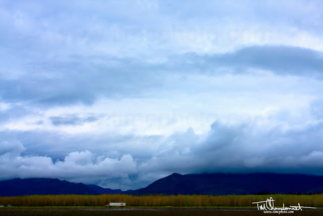Tim Chandonnet Photography,Bellingham Washington Photographer, 18 wheeler, truck, farm land, Skagit Valley,Skagit County,Pacific Northwest, Northwest Washington, trees, springtime, Chuckanut Mountains, North Cascade Mountains, storm clouds