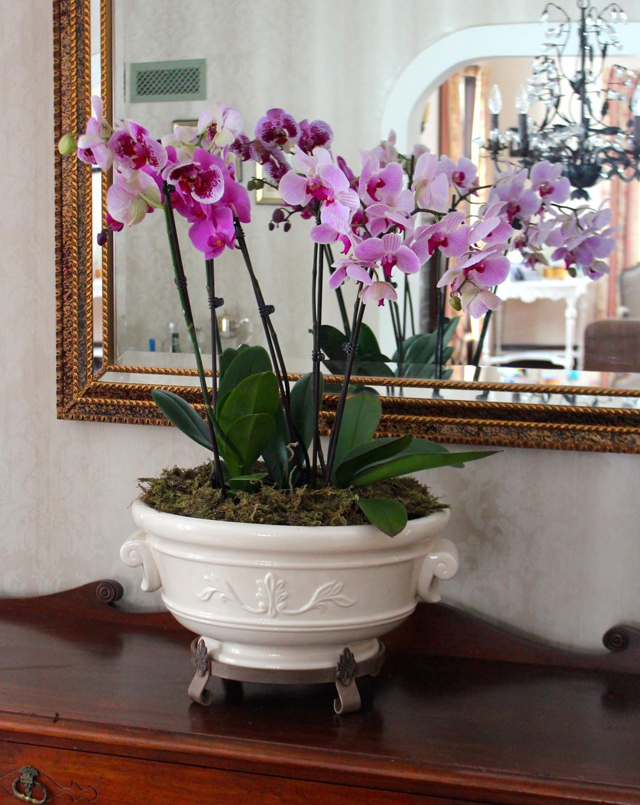 Орхидея в домашних условиях зимой