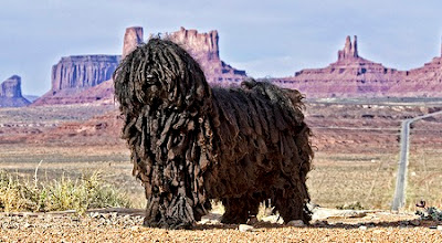 Strangest Dog Breeds Ever Seen On www.coolpicturegallery.us