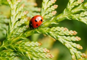 Keep Bad Bugs Away from the Garden