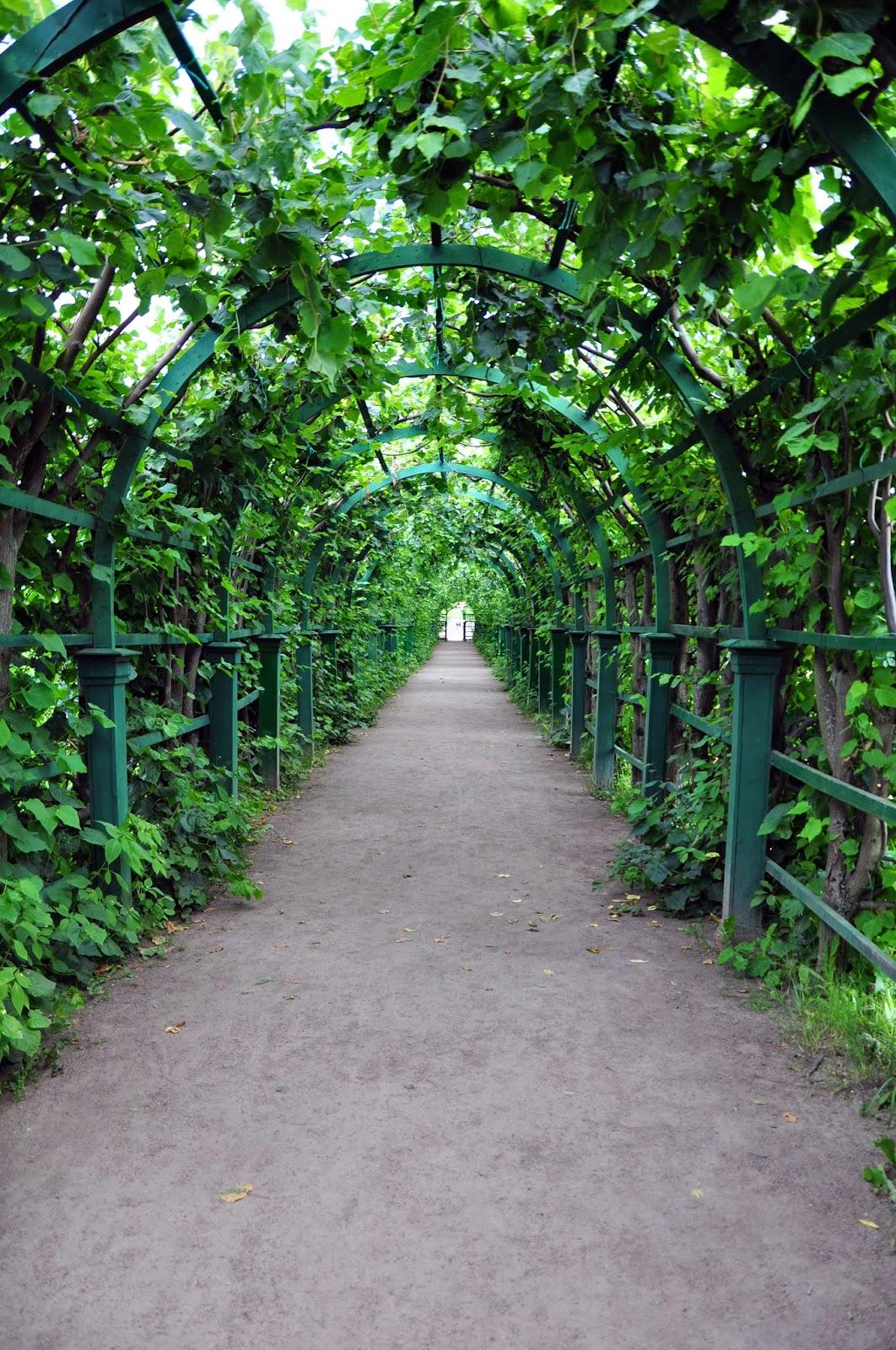 зимний сад Петербурга
