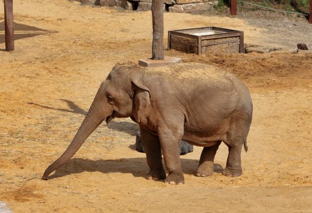 Elefantes en el Selwo Aventura de Estepona