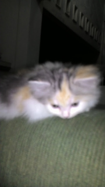 foto-kucing-imut_02