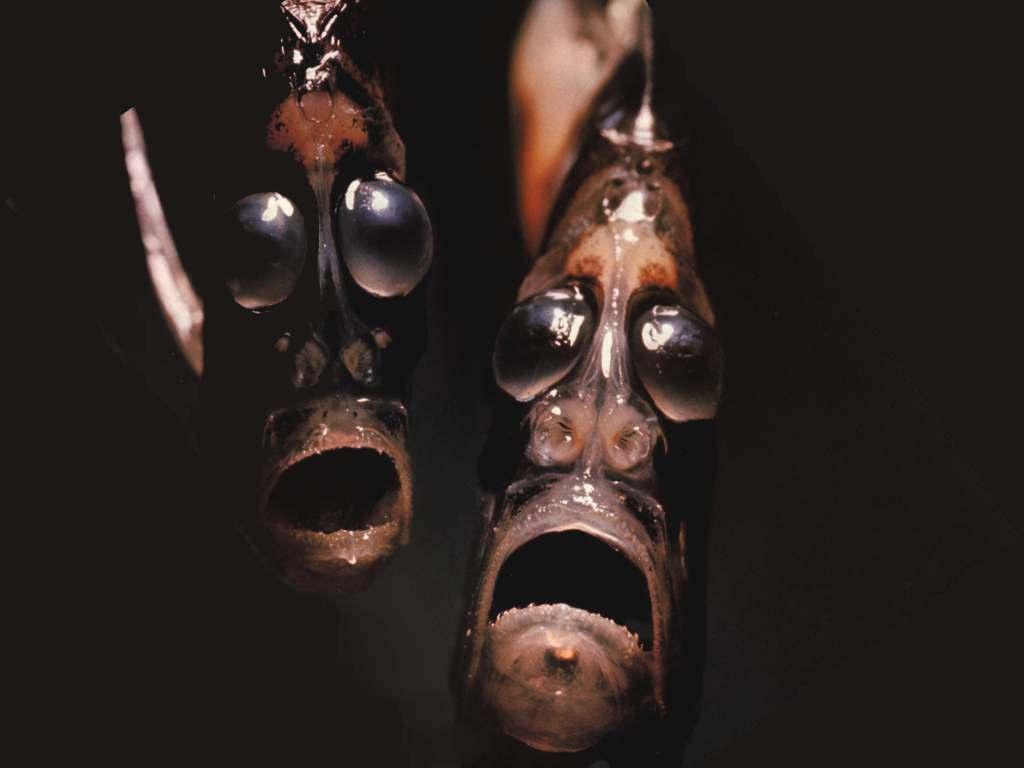 Mariana trench Hatchetfish