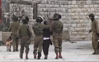 BINTEO Σοκ: Ισραηλινοί στρατιώτες ρίχνουν Παλαιστίνιο σε μανιασμένα σκυλιά  - Σάλος έχει προκληθεί