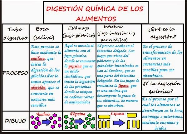 Ciencias para la vida digesti n for La quimica en la gastronomia