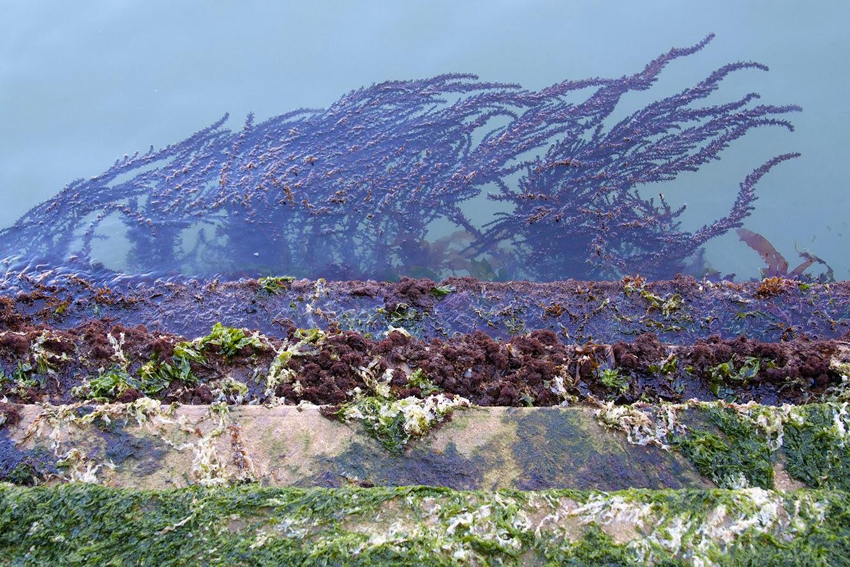 trap met zeewier