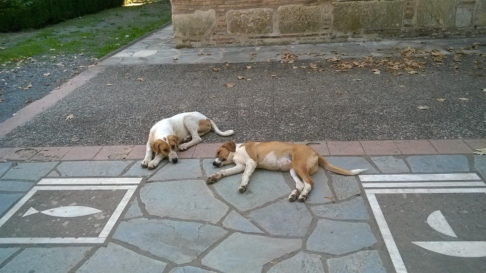 Τα  ζώα δεν επέλεξαν να ζούνε στο δρόμο και  να «ενοχλούν» την καθημερινότητα μας