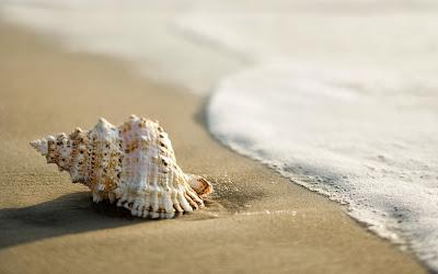 shell-beach-wallpaper-2560x1600