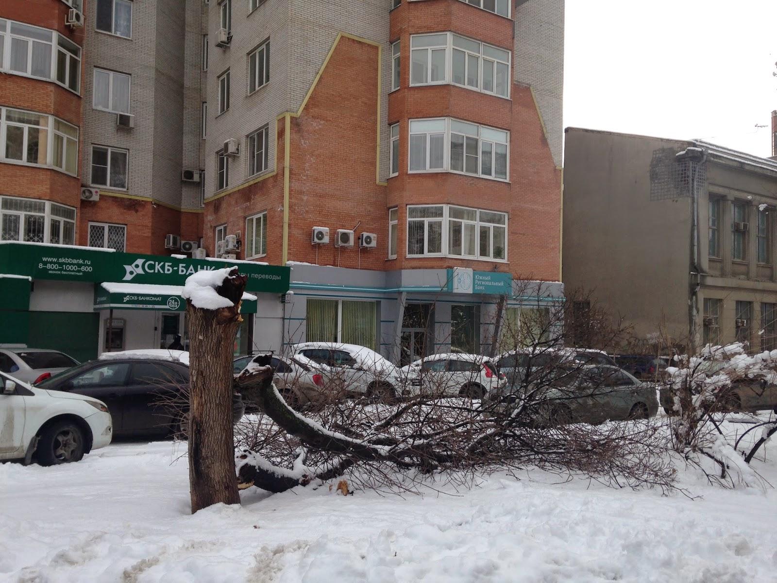 Поломанные-Деревья-Ростов