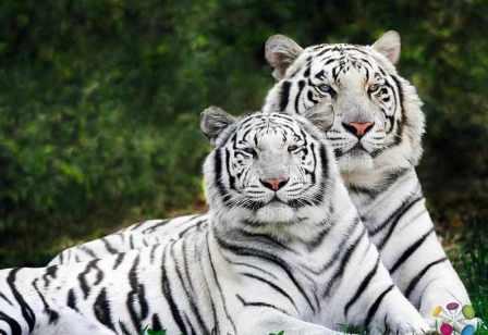 Free Wild Animals Pictures Wild Animals Desktop Images Wallpapers