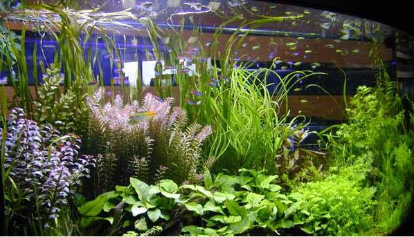 planted aquarium always been a challenges in aquarium care this