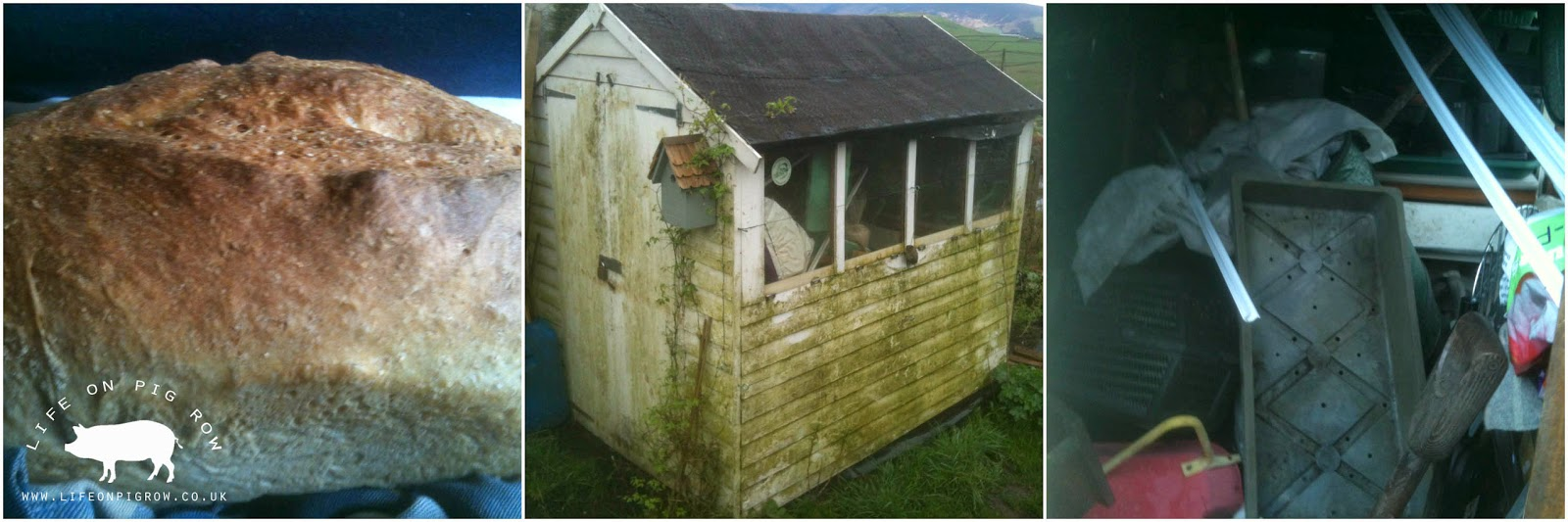 Share your bread photos and shed photos this week at https://www.facebook.com/lifeonpigrow. Let's celebrate good bread and our collapsing sheds!