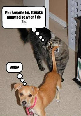 Image of: Crazy Funny Pics Of Animals Funny Picturesvideosjokes Funny Pics Of Animals Funny Picturesvideosjokes