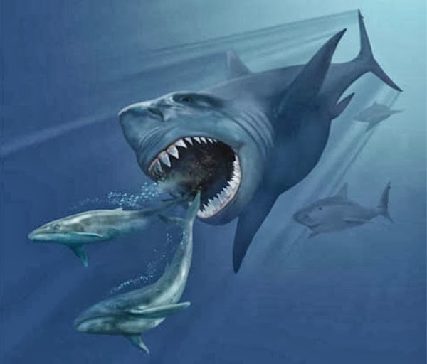 Megalodon Shark Wild Life World