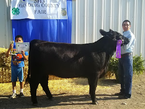 2013 Grand Champion Heifer