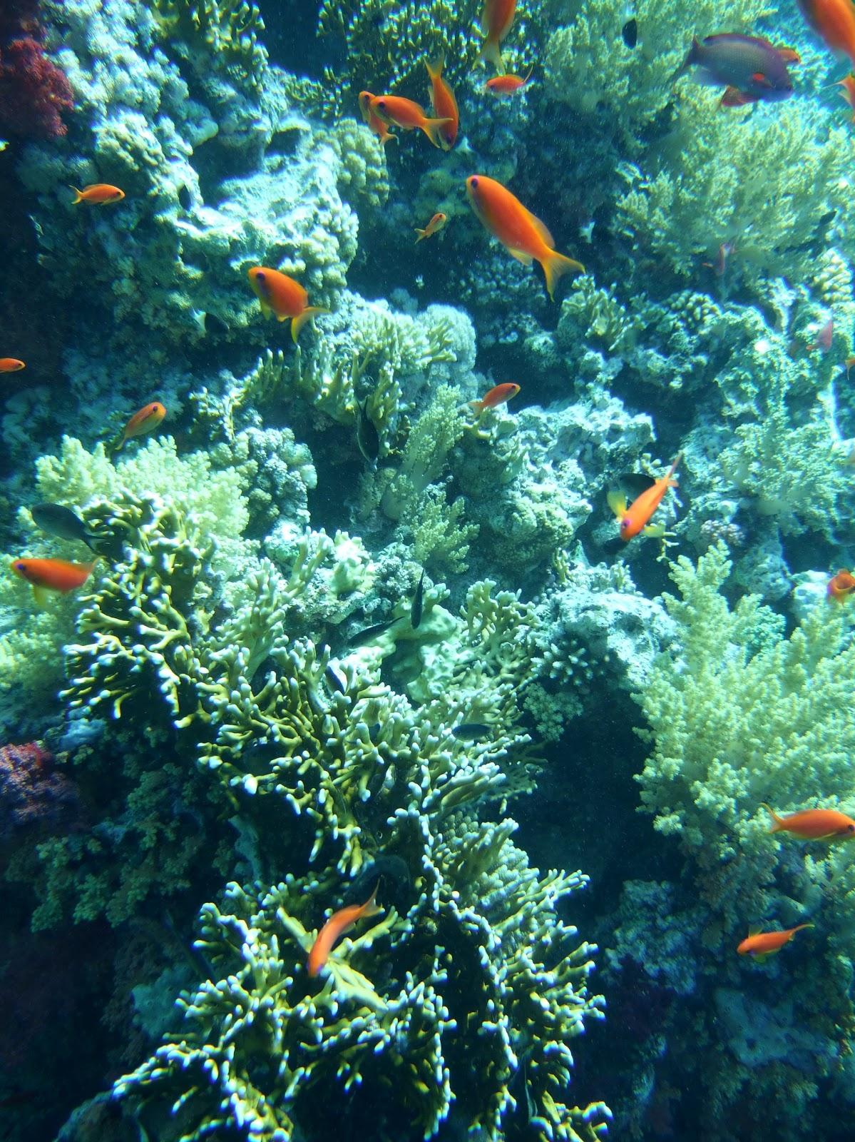 Teratak Kasih: Keindahan Malaysia (dasar laut)