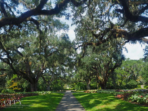 Live Oak Allee at Brookgreen Gardens