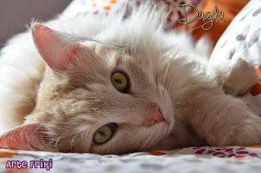 Mi gato ^^