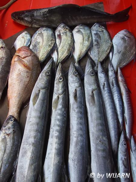 ตกปลาจังหวัดตราด