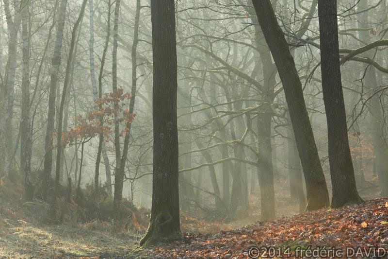 lumière brume forêt sous-bois Fontainebleau Seine-et-Marne
