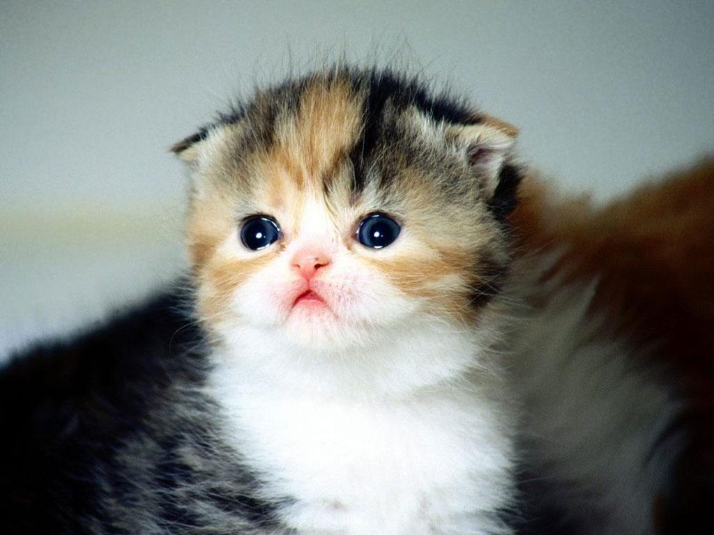 Imagenes Tiernas: Imagenes tiernas de gatitos