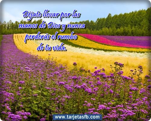 Amor y Amistad: Tarjetas de flores con frases lindas para facebook