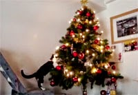 Cat Christmas Tree Accident Compilation