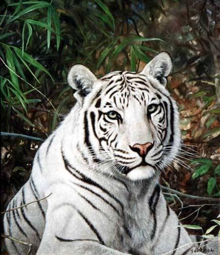 tigre de bengala tigre blanco de bengala