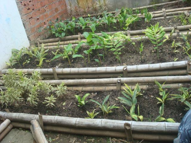 Actividades grupo flores y follajes sena de la for Construccion de viveros