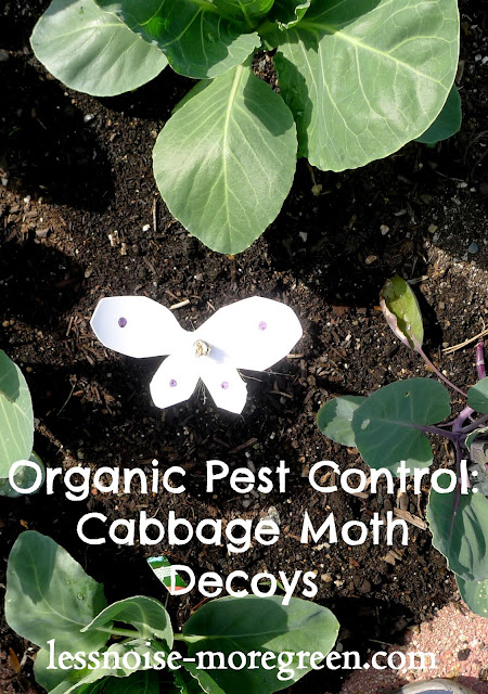 Organic pest control: Cabbage Moth Decoys