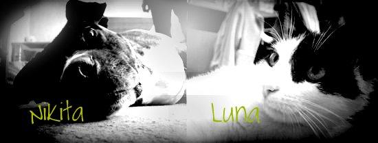 Nikitka & Luna