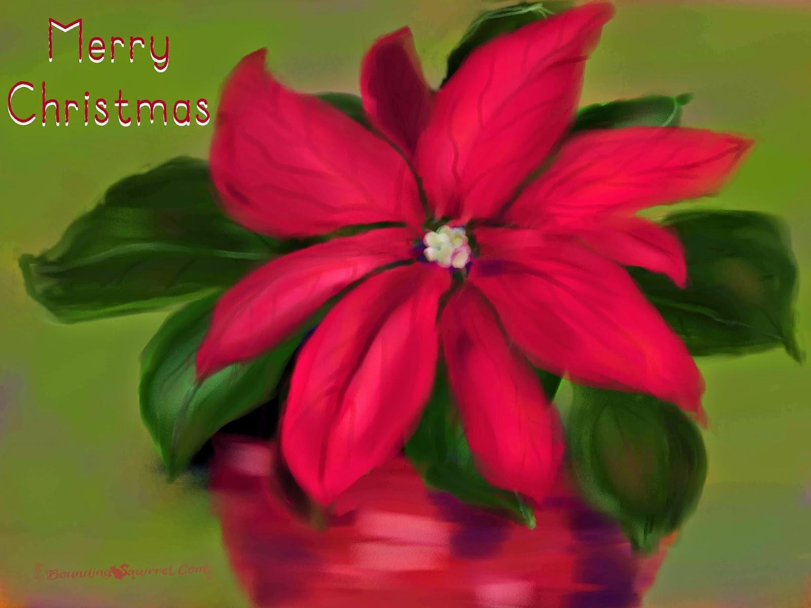 Merry Chistmas ecard-Poinsettia
