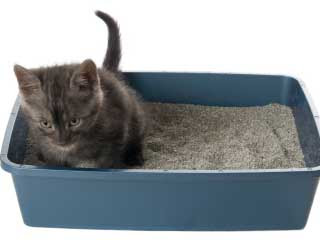 Tips mencuci pasir bekas kotoran kucing