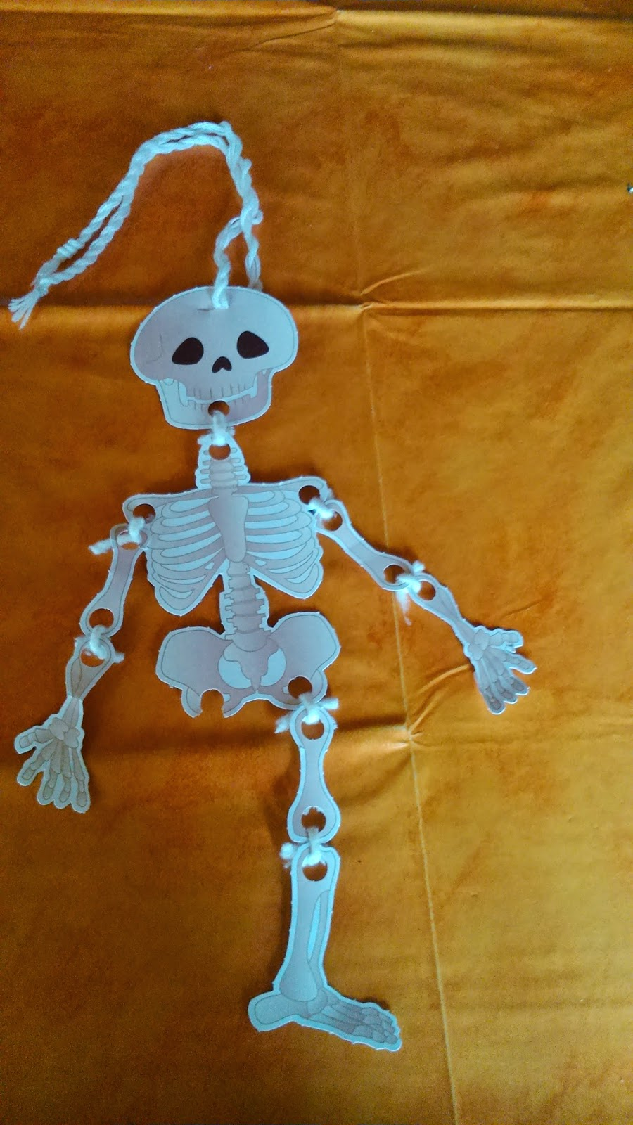 Aprender los huesos del cuerpo humano
