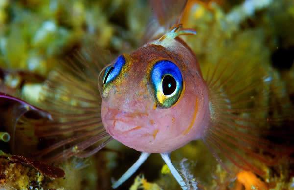 http://4.bp.blogspot.com/-vtO_og1juM4/UCEyEGpTzCI/AAAAAAAAAJg/lAKrbC_hpf0/s1600/photographs_of_fish_1.jpg