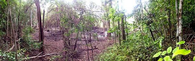 Siguiendo las huellas del venado llegamos a una aguada. Las aguadas son lugares donde se acumula el agua de lluvia. De estas aguadas dependen los animales de la selva durante la época seca. El guía nos da una triste noticia: este año, por primera vez en muchos años, la aguada se ha secado.La mayoría de los vecinos afirman que la aguada se secó después de la ampliación de la carretera; otros, los menos, nos dicen que es por la falta de lluvias. Lo único cierto es que los animales de la selva de Calakmul, los que bebían de esta agua, no tienen suficiente para beber ni refrescarse. UNESCO en México realizó un acto público en la reserva otorgando a Calakmul el título de Patrimonio Mundial Mixto, esos días los animales estaban en la aguada sin agua para beber.