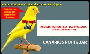Venda de Canários - Canáril Potyguar